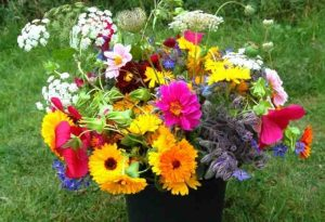 Our Top 50 Flowers For Cutting