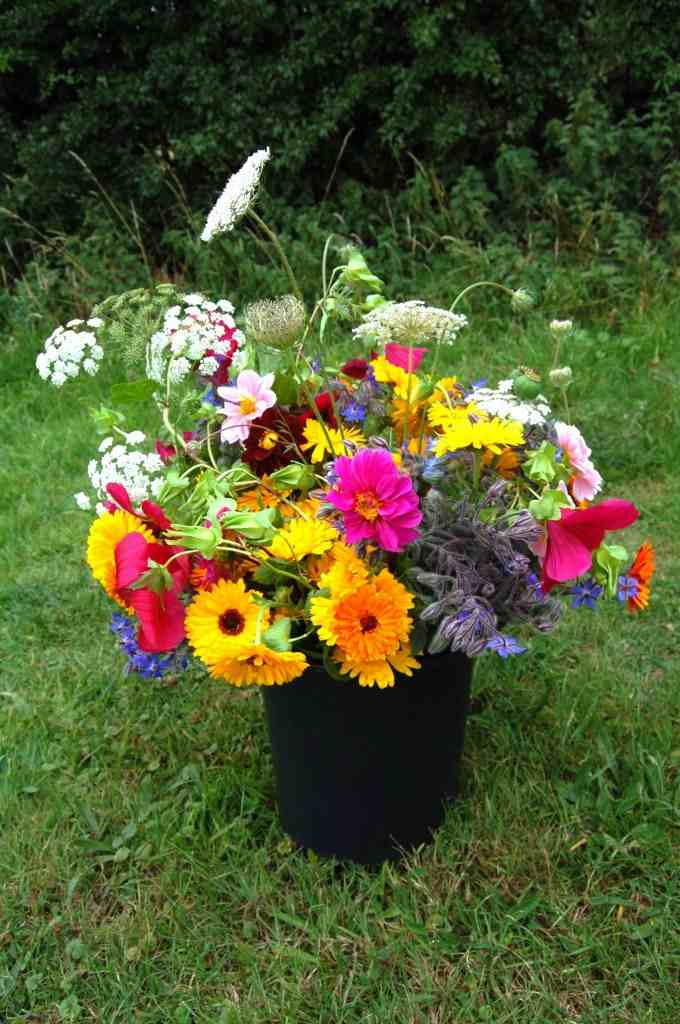 Top 50 cut flowers Higgledy Garden