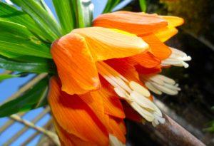 Spring In A Clients Garden