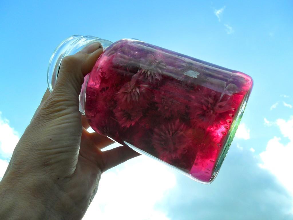 Edible Flowers, Chive Blossom Vinegar (Update)