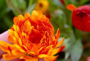 Free Online Cut Flower Growing Course