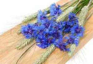 How To Dry Cornflowers.