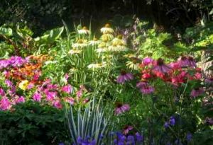 Choosing Perennials For The Higgledy Garden