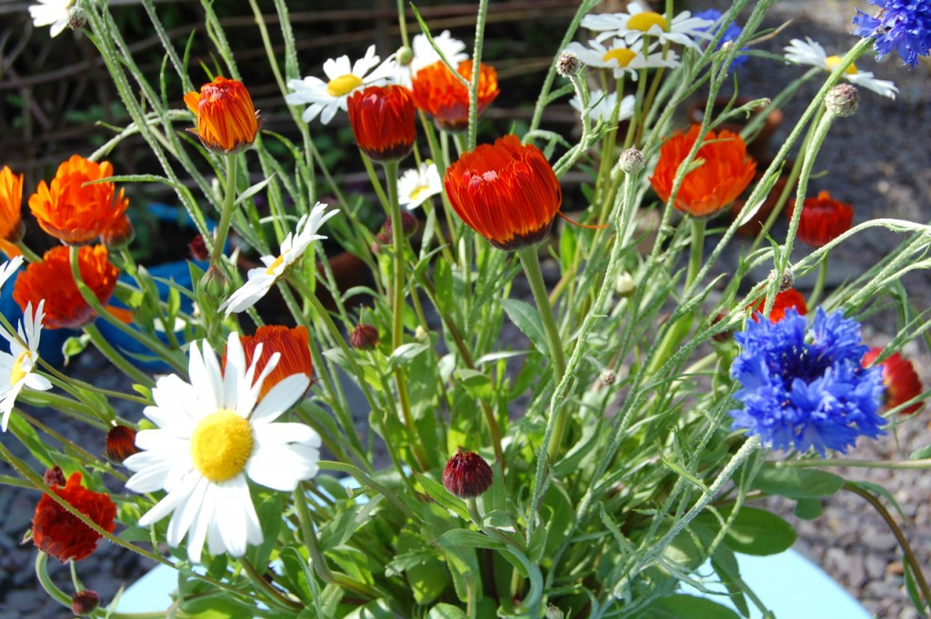 calendula & cornflowers