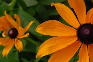 Flowers for chalk soil
