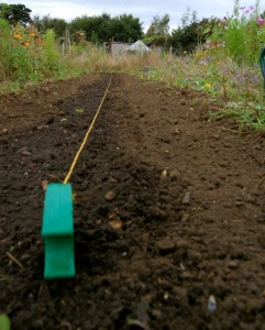 sowing autumn annuals