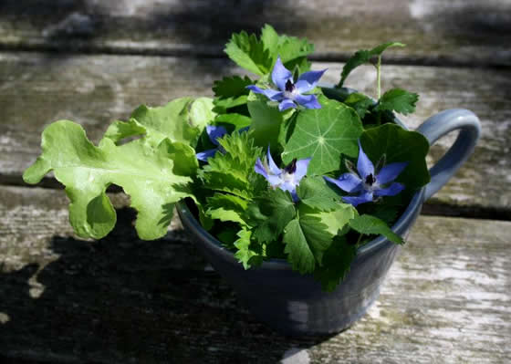 Borage flower in salad