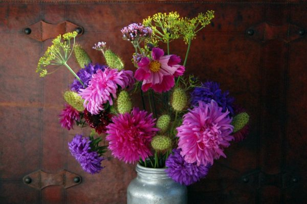 Scabious seed heads