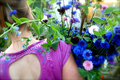 Cornflowers and Karen Wells
