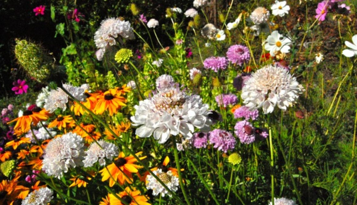 What Are The Best Annual Flowers For Attracting Bees Butterflies