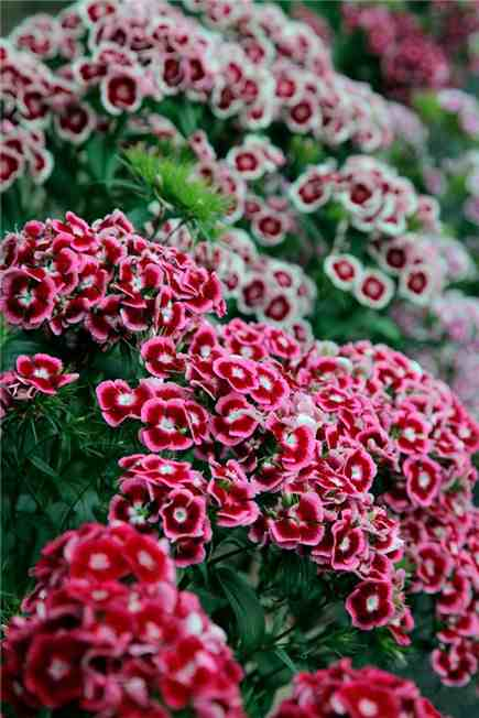 Flower seeds to sow in July