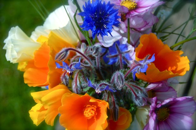I love the Borage and Eschscholzia combo.