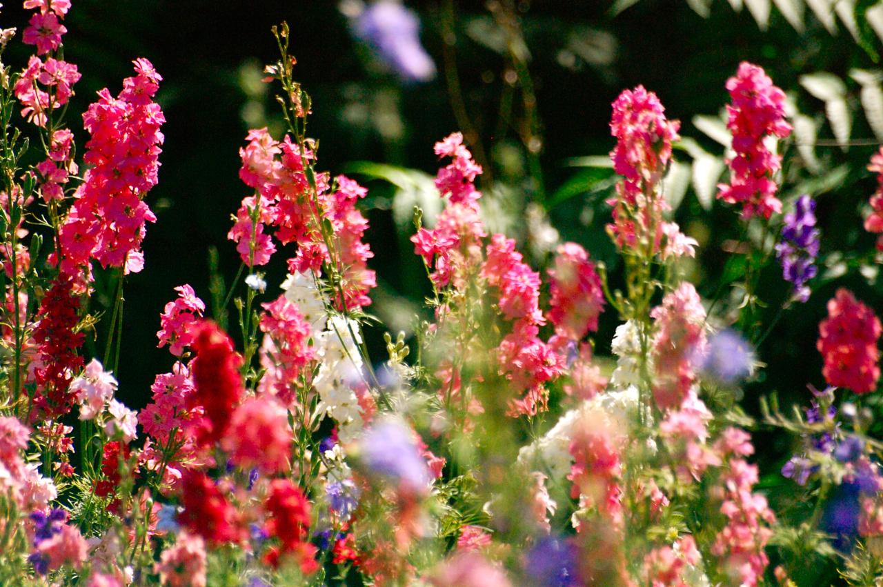how to grow a flower garden from seeds
