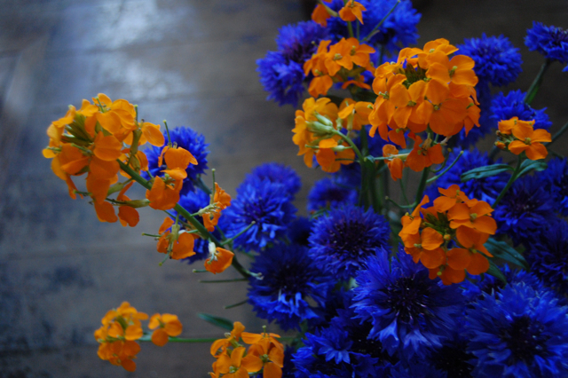 Cornflowers with Wallflowers.