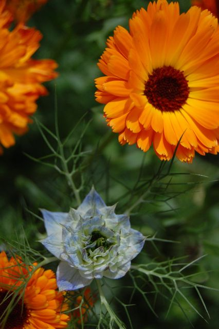 Calendula Hanging With Nigella...He Looks Like He'll Treat Her Well...