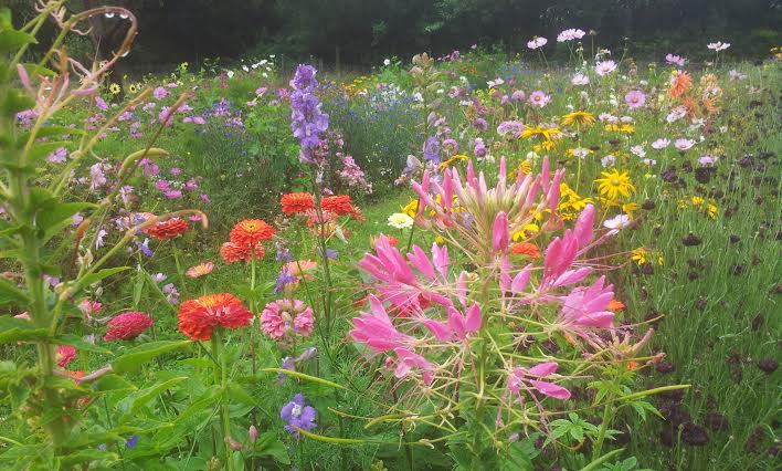 Mixed Beds In Your Cut Flower Patch