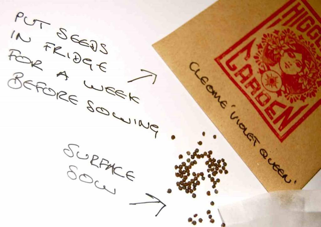 Cleome Seeds.