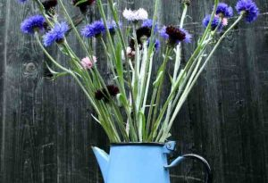 The Best Cornflowers For Your Cut Flower Patch This Season.
