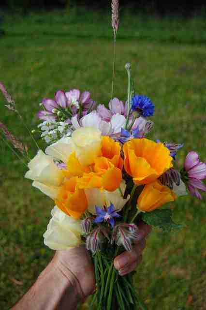 seasonal-flowers-july-2