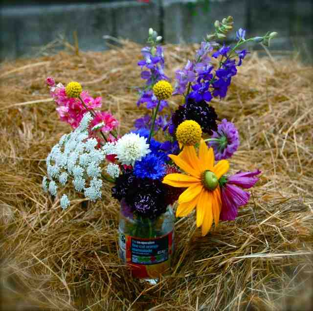 Craspedia flowers placed into a jar with the care and grace only offered by a ageing laboratory gorilla.