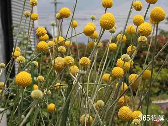 Credit: Gardencoach.com