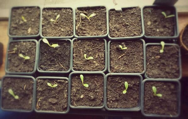 15 seedlings in a seed tray corresponding to 15 sq ft in a pool table. Have some of that Steven Hawking!