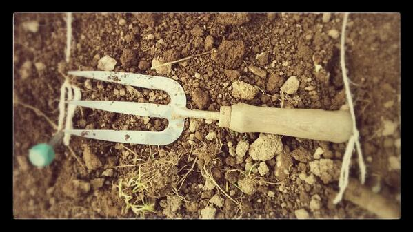 A trowel is usually about a foot long...so you can use it for spacing rows. (God I'm good)
