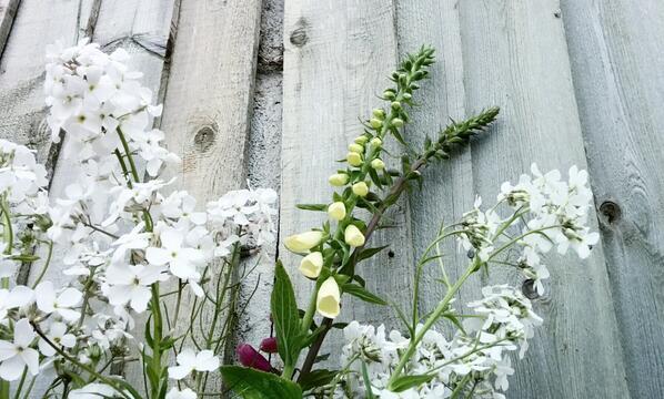 White Hesperis with Foxglove.
