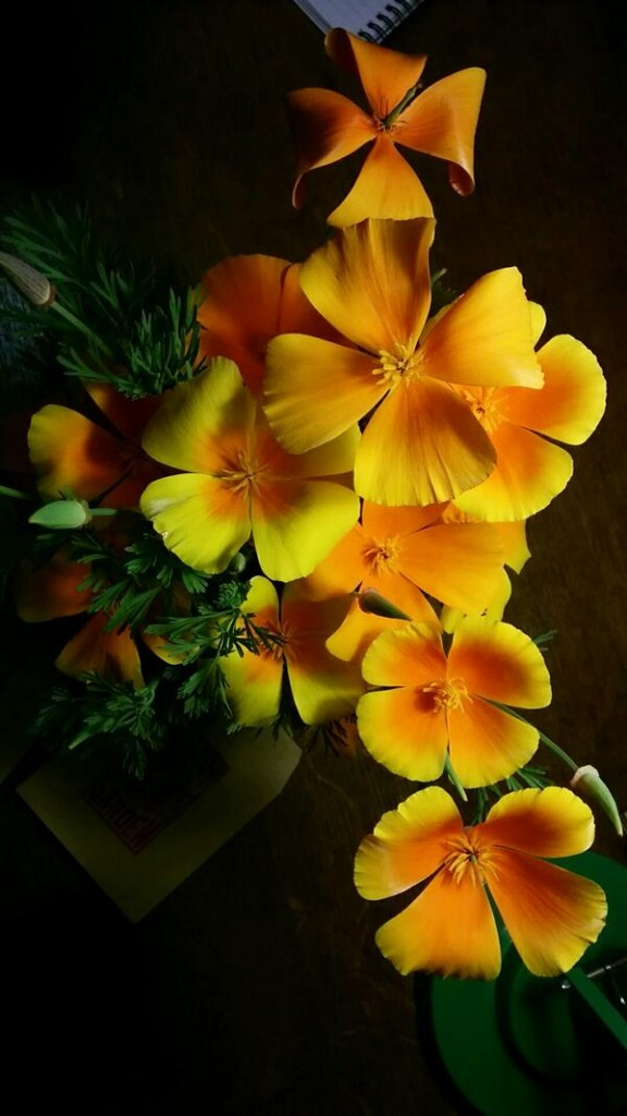 Eschscholzia 'Orange King' harvested a couple of days ago...I am hoping they will last a week.