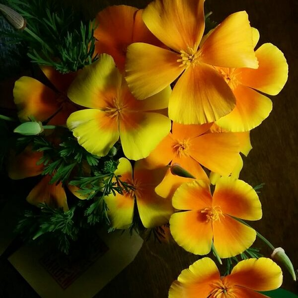Eschscholzia 'Orange King'..short lived in the vase but you have a gazillion flowers to harvest.