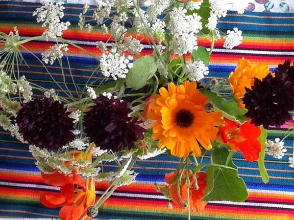 cornflowers-ammi