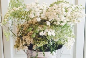 Bucket of Ammi! Posted on Twitter by Sarah Spurr of @sesbury
