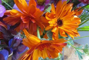 Thx to Sarah Chilton who Tweeted this pic of her Calendula Indian Prince...its a cracker.