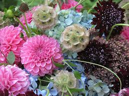 ...with Scabiosa 'Back in Black'.