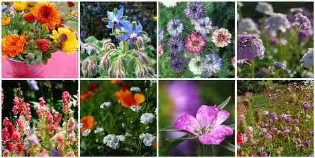 Some hardy annuals you can sow in September...Nigella, Corncockle, Calendula, Larkspur, Borage...and more.