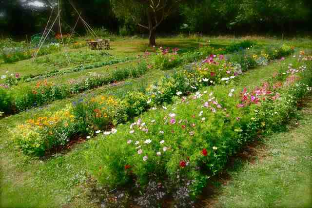 Designing The Layout Of Your Cut Flower Patch. – Higgledy Garden