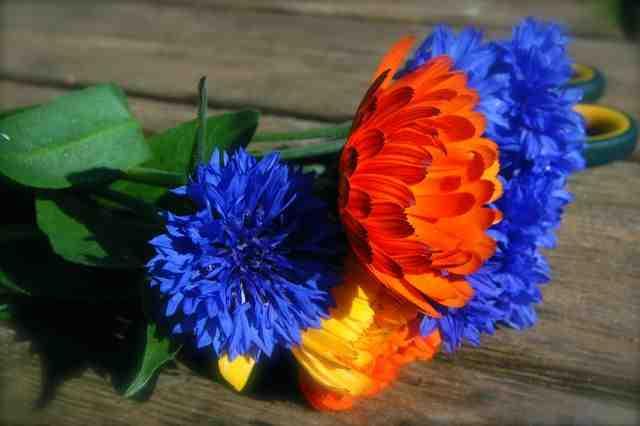 Cornflowers & Calendula.