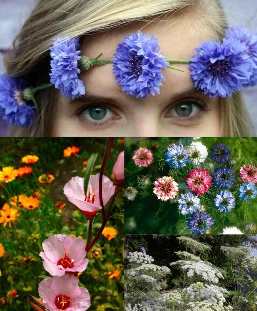 Cornflowers, Godetia, Nigella, Ammi.