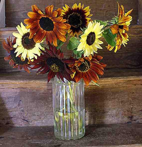 sunflowers-van-gogh