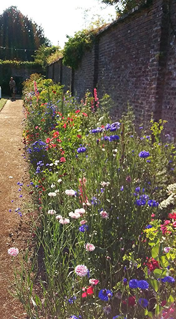Higgedy Annuals gracing the walled gardens of the Port Eliot Estate.