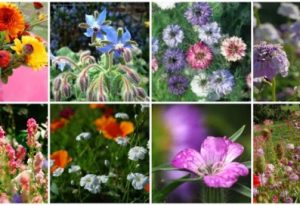 The Top Ten Tips For Starting Your Own Cut Flower Garden This Spring.