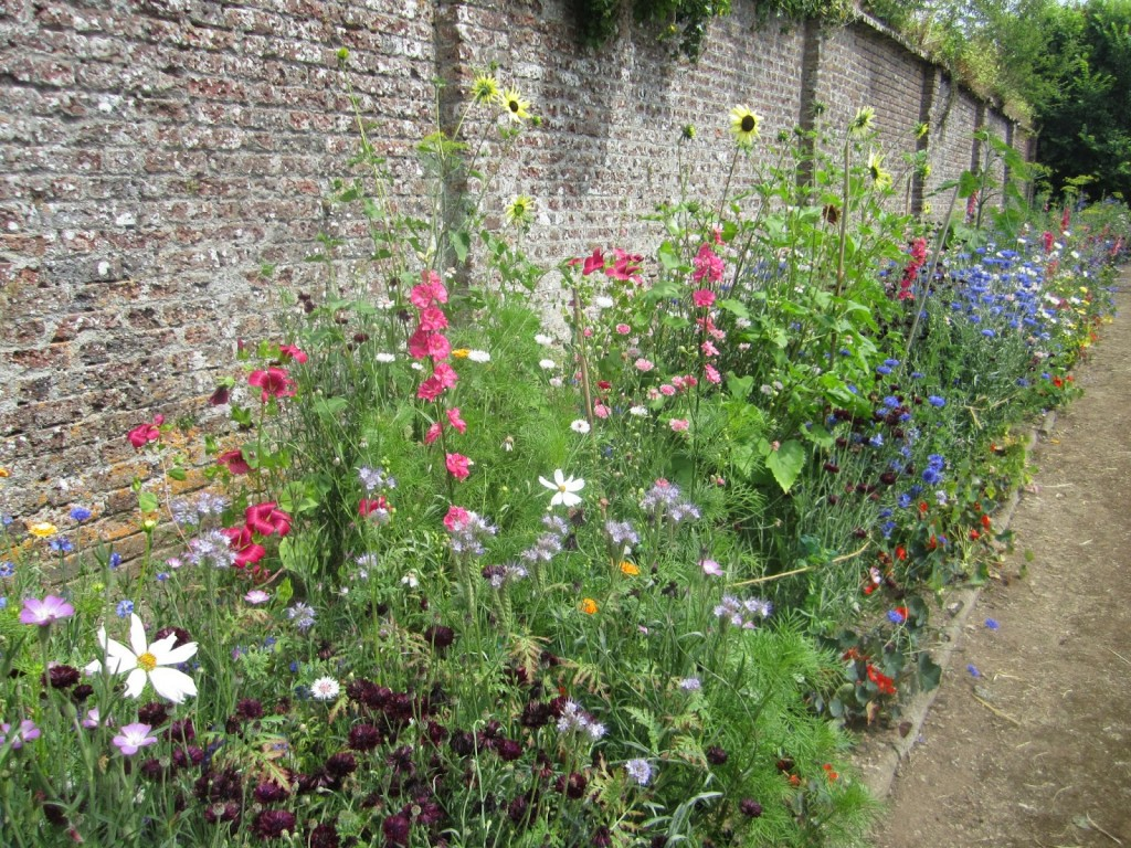 Higgledy Flowers in the walled garden of Port Eliot.