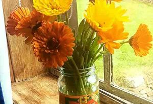 calendula-flowers1