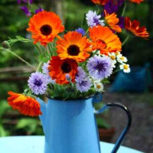 calendula-indian-prince-coffeepot
