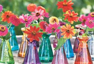 May sown Zinnias looking bonkers...via The Telegraph.