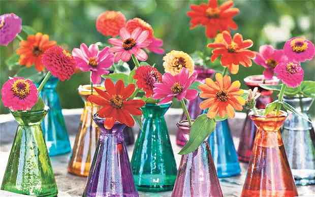 May sown Zinnias looking bonkers...via 'The Telegraph.'
