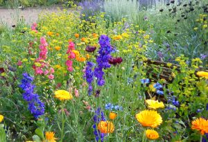 Autumn Flower School. Top 10 Hardy Annuals. #4