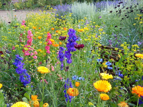 Splendiferous bed of Hardy Annuals from at Catkin Flowers. (Clever folk)