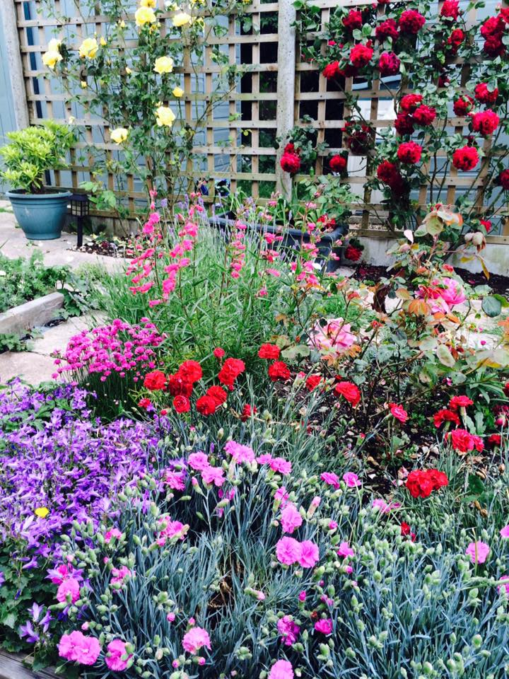 """Roses, lavender, penstemons, pinks and campanula- chaotic but wonderfully scented and the bees love it."" Thank you Amanda Jarrett."