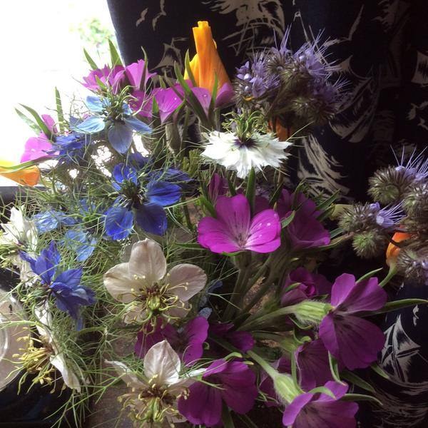 All these beauties were self sown. Thanks to Sarah Hart-Davies for this pic.